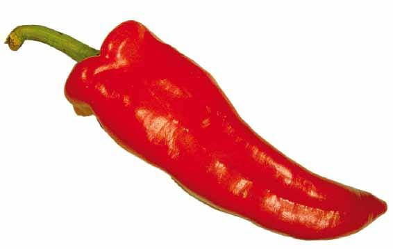 Provisions concerning Quality B. Classification Sweet peppers are classified in three classes, as defined below: (i) Extra Class Sweet peppers in this class must be of superior quality.