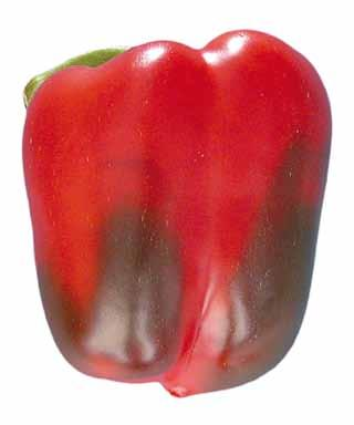 Provisions concerning Quality Photo 42 Classification: Change in coloration as produce ripens allowed in all classes 29 - slight skin defects, such as pitting, scratching, sunburn, pressure marks