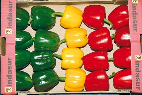UNECE Explanatory Brochure on the Standard for Sweet Peppers Photo 75 Presentation: Uniformity acceptable colour range for peppers turning colour in Classes Extra and I 60 However, a mixture of sweet