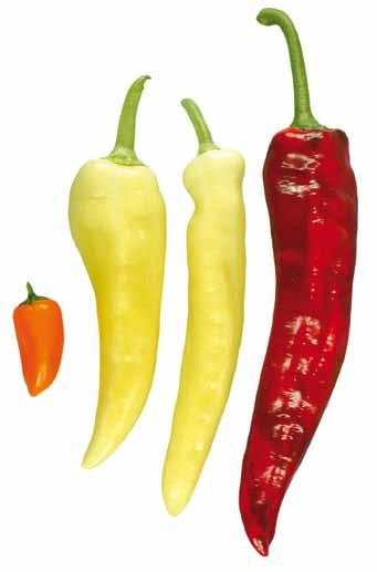I. Definition of Produce This standard applies to sweet peppers of varieties 1 (cultivars) grown from Capsicum annuum L.