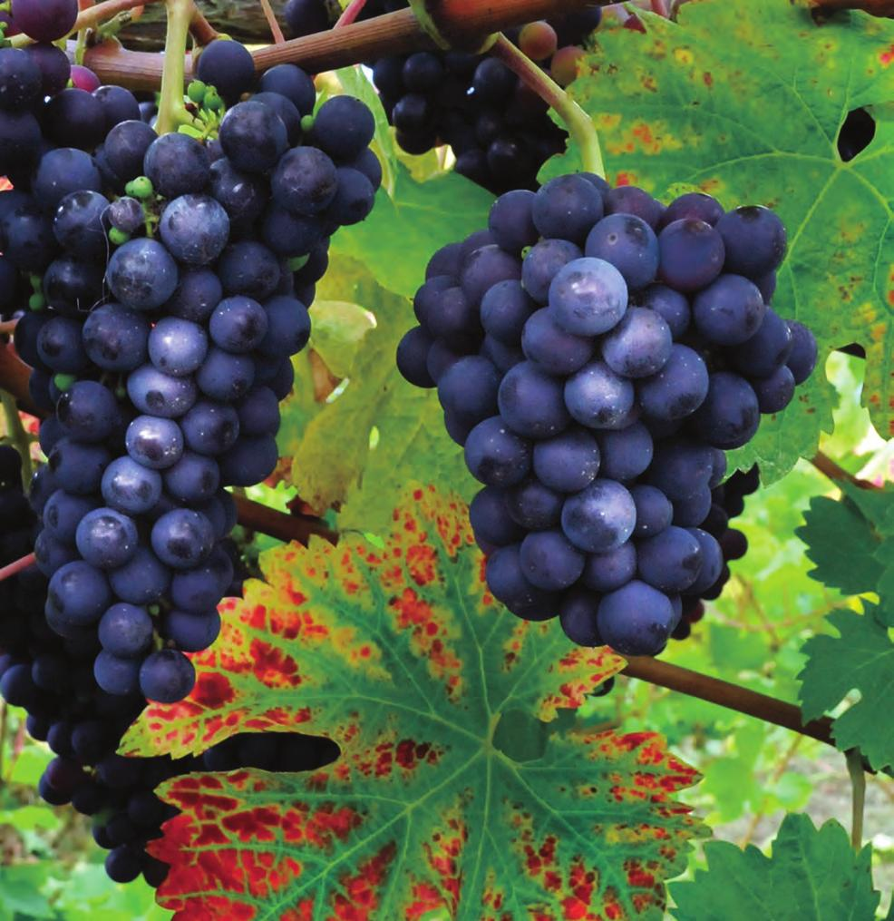 2014 Vine Growers Yearbook