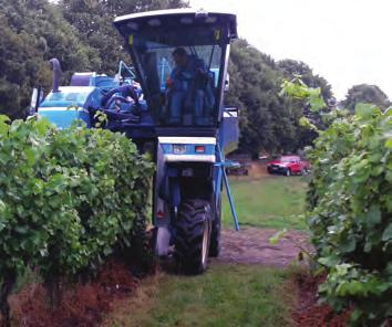 MACHINERY FOR VINEYARDS becomes more viable.