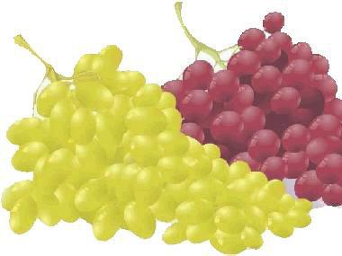 Adams,DO.Phenolics and ripening in grape berries. Am.J.Enol.Vitic.2006,57,249-256 2.Agati,G;Pinelli,P; Cortes-Eb,S; et,al.