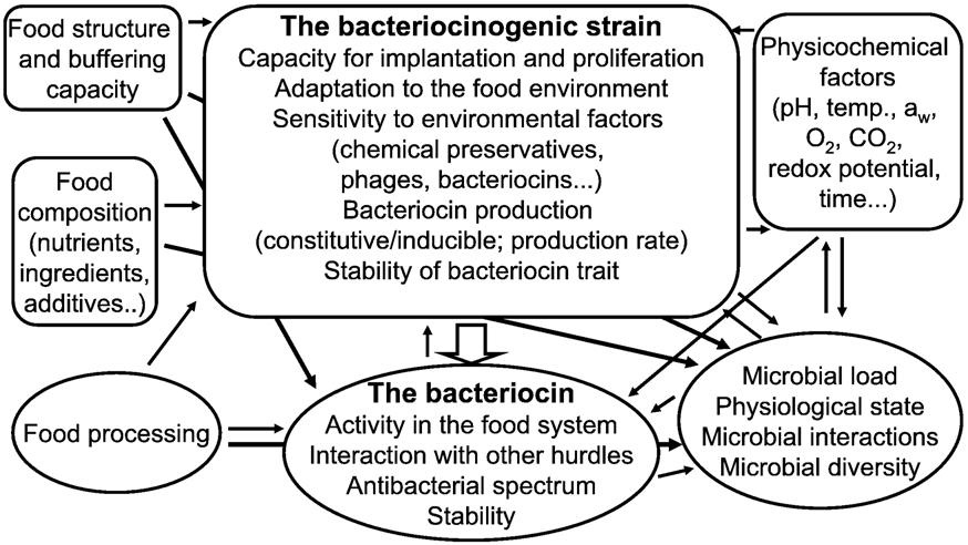 Figure 2.5: Influence of different factors on the efficacy of in situ bacteriocin production for biopreservation (Gálvez et al., 2007). 2.10.