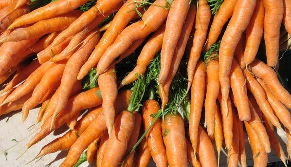 Golden Carrot Bake - Part 1 3 cups shredded carrots 1½ cups water ⅔ cup uncooked brown rice ½ teaspoon salt ¼ teaspoon pepper - Part 1 Combine in a saucepan and bring to a boil.