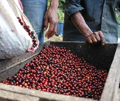 QUALITY AND VALUE ADDITION OF COFFEE IN UGANDA With the liberalization of the coffee subsector, a need arose to control the quality of coffee produced and exported from Uganda.