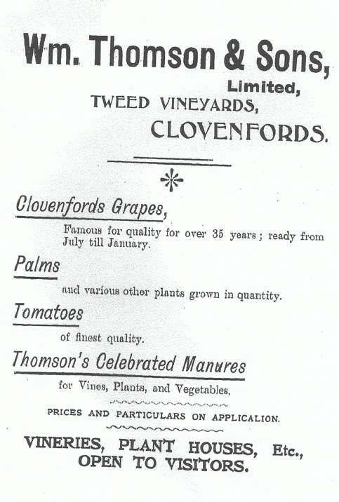 Vineyards Poster, Advertising The Variety Of Products On