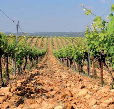 land bathed in bright sunlight. The wines personality is due, in part, to this location.