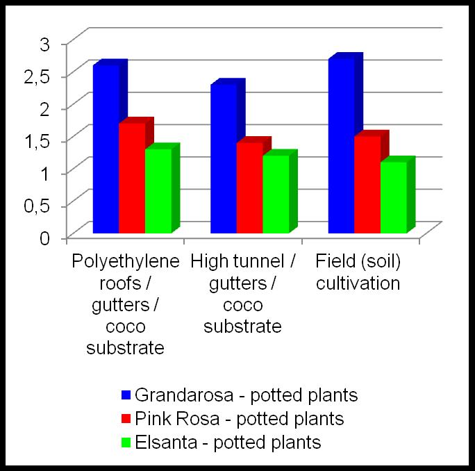 EXP. II: PRODUCTION FOR LATE FRUIT RIPENING BY LATE PLANTING OF FRIGO A PLANTS UNDER COVERS