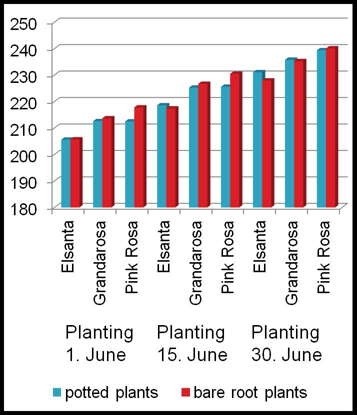 EXP. III: PRODUCTION FOR LATE FRUIT RIPENING BY LATE PLANTING OF FRIGO A PLANTS IN THE OPEN FIELD FRUIT RIPENING TIME FAEDI INDEX 2012 2013 Planting Planting Planting 17. June 1. July 10.