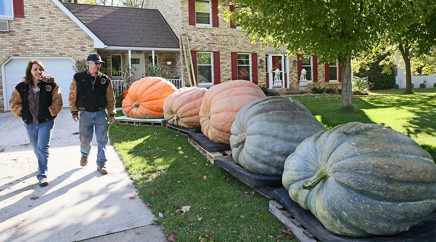 Pumpkins from another planet? No, Wisconsin By Milwaukee Journal Sentinel, adapted by Newsela staff on 10.26.
