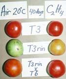 Composition Sugars Acids Aroma volatiles Vitamins Maturity & Ripening Stages GREEN The tomato surface is completely green. The shade of green may vary from light to dark.
