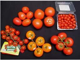 Tomato Type & Composition, U.S. Retail Tomato Type Soluble Solids Titratable Acidity Grape.