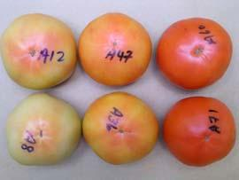 z--hexanal, ppm Low temperatures reduce aroma volatiles z- hexanal as example of important volatile Table-ripe tomatoes