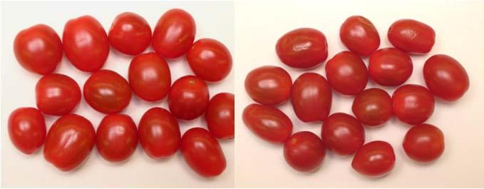 Storage for grape tomatoes is somewhat different due to water loss; High quality grape tomatoes on salad trays at C okay for - days A. Visual Quality B. Weight Loss C d C d =excellent, =unuseable LSD.
