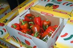 Bell peppers generally do not respond to ethylene Temperature has the greatest effect on color change or ripening.