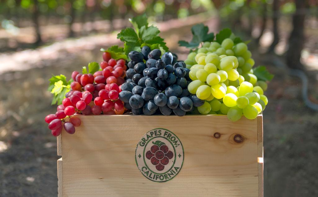 ABOUT California TABLE GRAPES More than 99 percent of commercially grown grapes in the United States are produced in California.