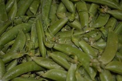 Sugar Snap Peas Sweet-tasting whether raw or cooked, are a cross between garden or shelling peas and snow peas.