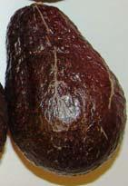 Example of fruit