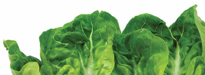LETTUCE PRODUCTION CROP YEAR ACREAGE HEAD LETTUCE PRODUCTION PER ACRE TOTAL UNIT VALUE PER UNIT TOTAL Naked Pack 5,555,000 5,326,000 9 $11.50 $16.