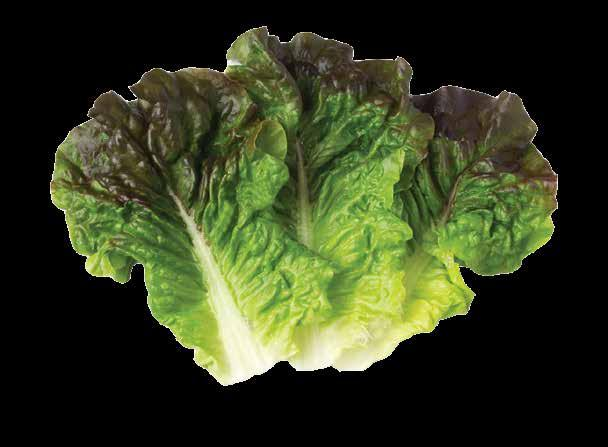 Strawberry $724,602,000 2 2 Head Lettuce $478,172,000 3 3