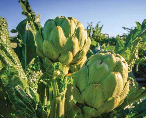 VEGETABLE CROPS CROP 1 YEAR ACREAGE PRODUCTION PER ACRE TOTAL UNIT VALUE PER UNIT TOTAL 2 Anise 789 769 16.35 17.