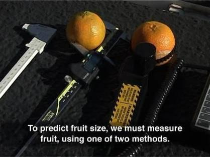 Measure 50 to 150 fruit on representative trees 3. Measure at least 500 fruit per unit (block or cultivar) 4.