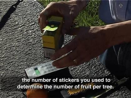 information Index Trees To build accurate historical data, it is important to measure and test the fruit of the same index trees at the same time every year.