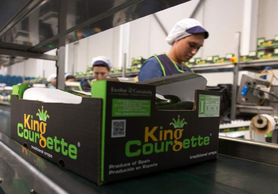 COURGETTE KING COURGETTE BRANDING ECourgettes provide only 17 calories per 100 g and Contain no saturated fats or cholesterol.