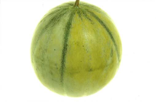 Test by REFRACTOMETER Sample preparation Melons: Using a small diameter metal borer (1 4 mm) a core of melon should be extracted from the equatorial axis area.
