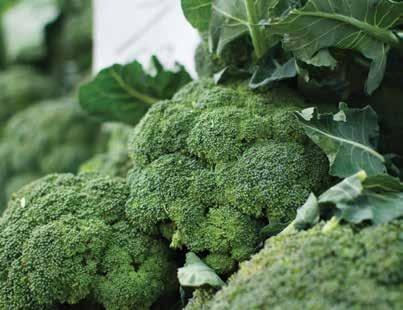 BROCCOLI APRIL Broccoli belongs to the Cruciferae family, which also includes cauliflower, cabbage, bok choy and Brussels sprouts.