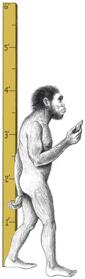 2.3. Homo Habilis: Handy Man Homo habilis A second group of hominids was discovered by the husband and wife team of Louis and Mary Leakey.