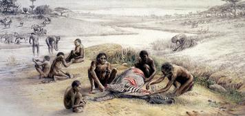 modern humans than Lucy was. Handy Man s tools were very simple. These hominids used animal bones as digging sticks and rocks as chopping tools. They also made sharp pieces of stone for cutting.