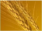 designate a separate area of the kitchen to prepare gluten free items Use separate equipment,