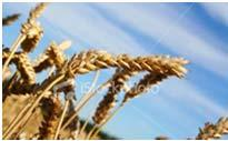 Food items on the menu are labeled with GF 2.