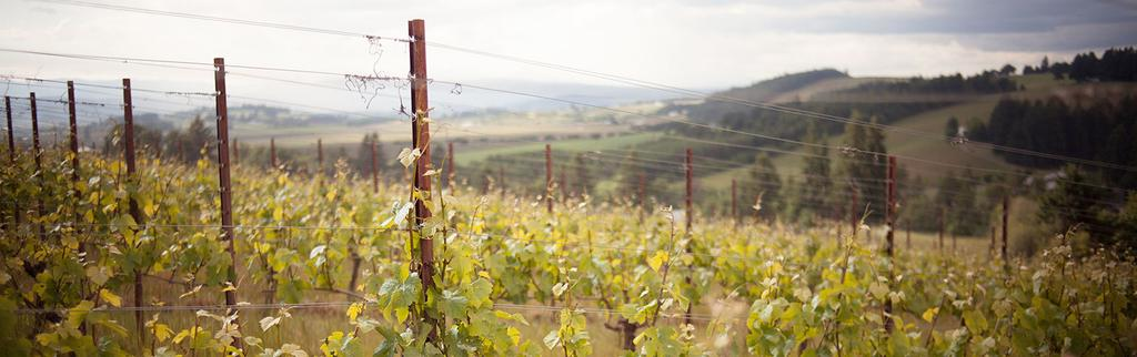 LIVE Wines Backgrounder Certified Sustainable Northwest Wines Principled Wine Production LIVE Wines are independently certified to meet strict international standards for environmentally and socially