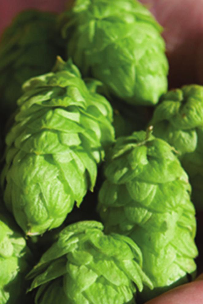 Role in Brewing Hop Products Available HopInspiration Range Aroma Dry Hop Aroma Extracts Hop Oils The Hop Inspiration Range HopBurst Hop Oil Fractions Flavour Late Hop Flavour Extracts The Hop