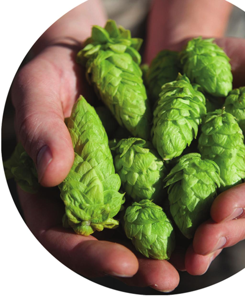 Green and Clean We use only the highest quality hop cones to ensure we produce the best quality extracts for our customers. Our extraction technologies are green and clean.