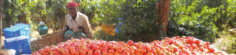 TOMATO ACIDIC AARTI F1 (CLXTO377) DEVIKA F1 (CLXTO213) Plant Habit Maturity Days (1st harvest after transplanting) Fruit Shape Fruit Weight (g) Colour Determinate 70-75 Flat round 75-80 Red