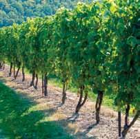 M a r k e t i n g Of ONTARIo WINES By nature, the consumer demand for wines involves a complex of factors, many of which are unrelated to varietals.