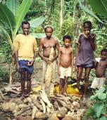staple crop in Africa Subsistence production systems Considered to be an