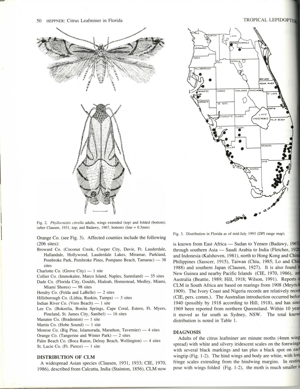 50 HEPPNER: Citrus Leafminer in Florida TROPICAL LEPIDOPTE«Fig. 2.