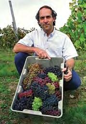 There are many kinds of grapes. Grapes can be grouped together based on their purpose. Some are meant to be eaten (table grapes) or if they are meant for wine-making (wine grapes).