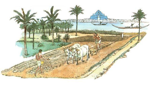 Technology for Farming Sumerians used technology to turn Mesopotamia into productive farmland. They dug miles of canals to irrigate (supply water to) their crops.