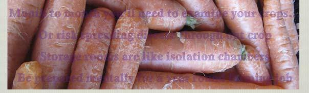 Sorry, that s not the end of it culling in storage There s storage, then there s long term storage October November December January February March April Carrots Carrots Carrots Carrots Carrots