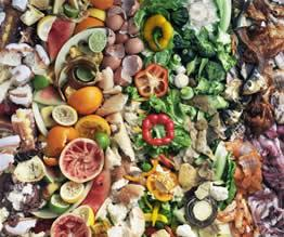 Food Wastes Common Processes in