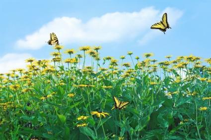 Butterfly Meadows The aroma of a bright, summer day. Delight in the aroma of the fresh outdoors.