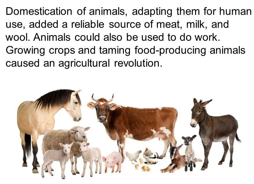DOMESTICATION OF ANIMALS (AND PLANTS) Domestication =