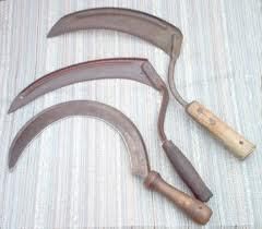 ) Sickle invented for cutting grains; pottery used as containers Crops