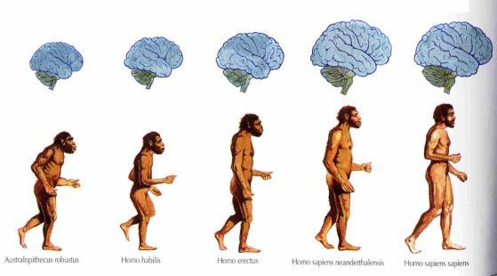 Human Origins First pre-human hominids date back about 4.